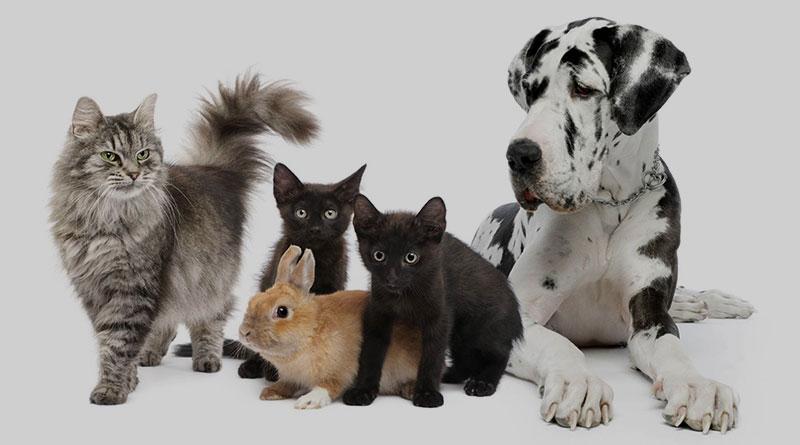 Evcil Hayvan Sahibi Olmanın Avantajları, Evcil Hayvan Sahibi Olmanın Avantajları Nelerdir