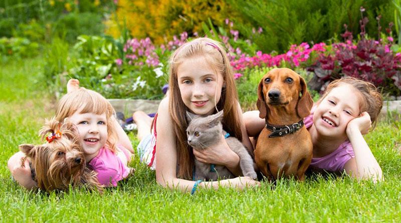 Evcil Hayvan Sahibi Olmanın Dezavantajları, Evcil Hayvan Sahibi Olmanın Dezavantajları Nelerdir