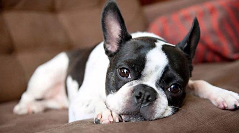 Evde Köpek Bakımı Nasıl Olmalıdır, Evde Köpek Bakımı, Köpek Bakımı