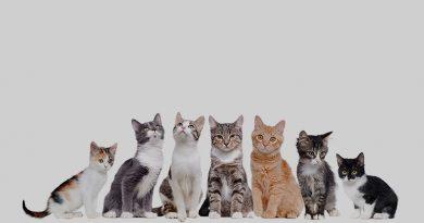 Kediler Hakkında Bilinmesi Gerekenler, Kedi Bakımı, Kediler Hakkında Bilinmesi Gerekenler Nelerdir