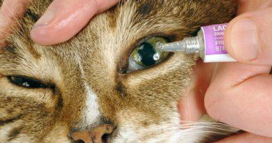 kedilerde göz bakımı ve sağlığı