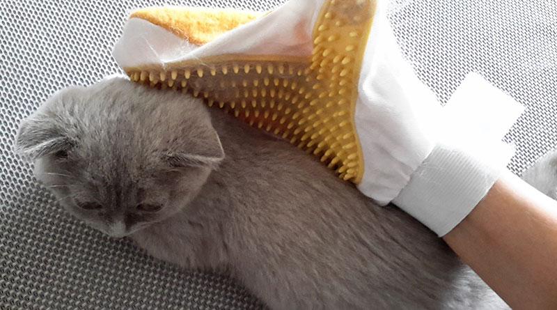 Kedilerde Tüy Bakımı, Kedi Bakımı, Kedilerde Tüy Bakımı Nasıl Yapılmalıdır