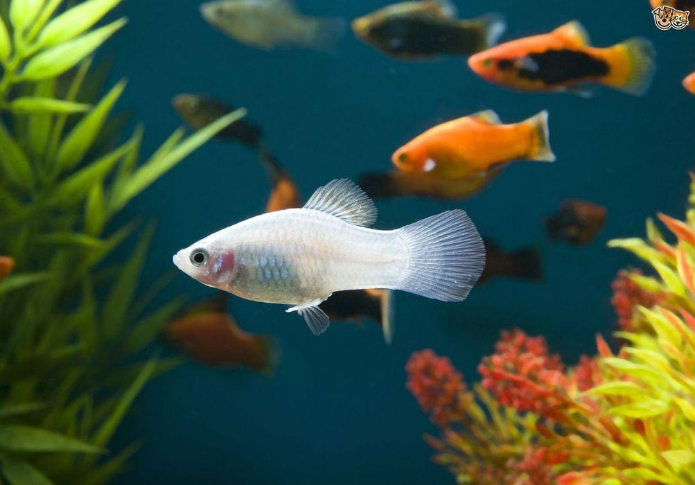 Akvaryuma En Çok Yakışan 5 Balık