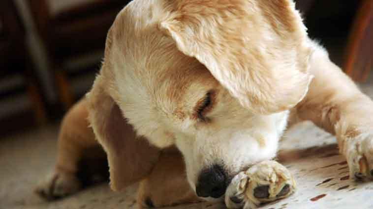 En Sık Görülen Köpek Hastalıkları Nelerdir