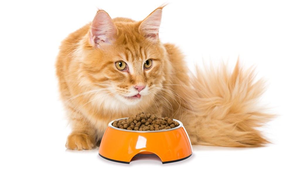 Kediler İçin Diyet Uygulamaları Nelerdir