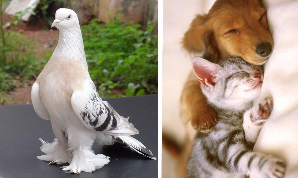 ev ortamina uygun evcil hayvanlar