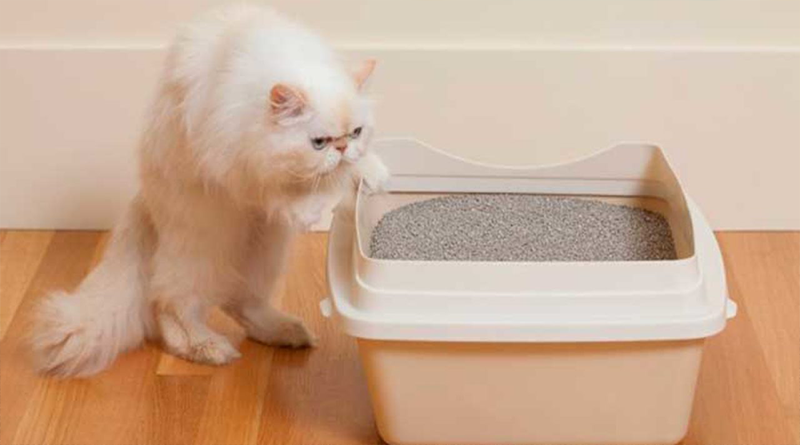 yavru-kedi-tuvalet-egitimi