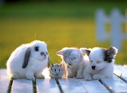 Evcil Hayvan Türleri