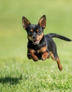ilk köpeğim
