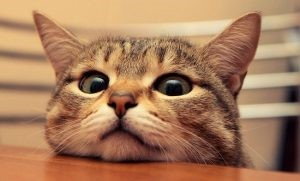 kediler vcut dili 9