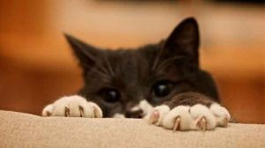 kediler vucut dili10