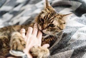 kediler vucut dili11
