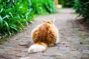 kediler vucut dili5