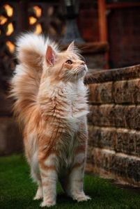 kediler vucut dili6