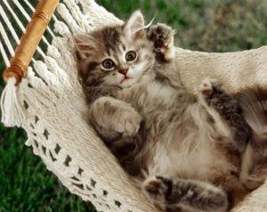 kediler vucut dili7