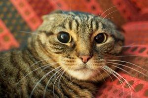 kediler vucut dili8