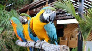 Papağan bakımı
