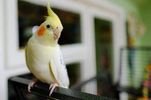 sultan papağanı 6
